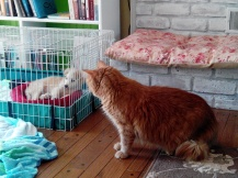 Dipper checking out his new brother
